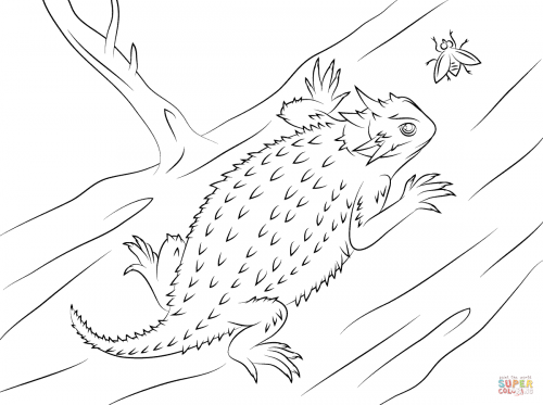 Striped Plateau Lizard coloring #8, Download drawings