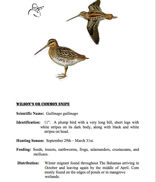 Striped-beak Snipe coloring #7, Download drawings