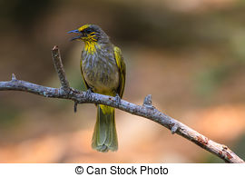 Stripe-throated Bulbul clipart #20, Download drawings