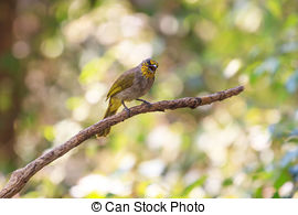 Stripe-throated Bulbul clipart #12, Download drawings