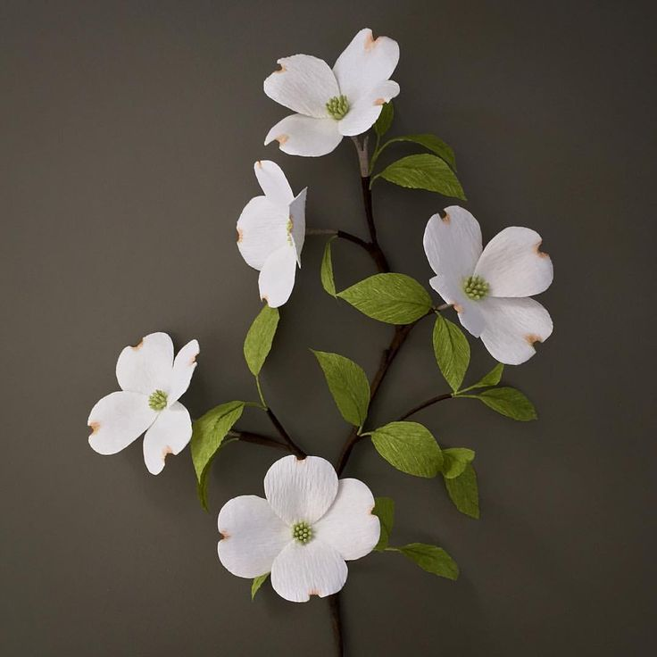 Styrax Blossom svg #3, Download drawings