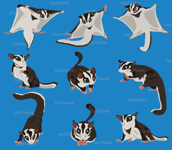 Sugar Glider clipart #14, Download drawings