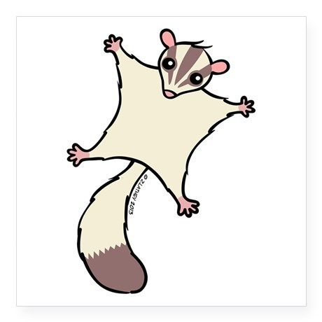 Sugar Glider clipart #5, Download drawings