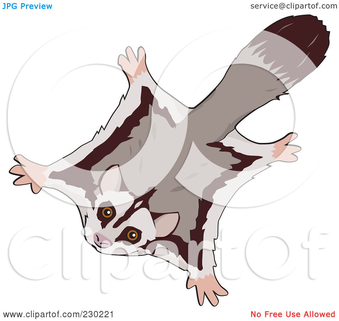 Sugar Glider clipart #6, Download drawings