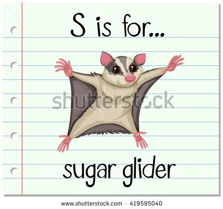 Sugar Glider clipart #8, Download drawings