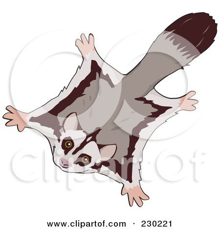 Sugar Glider clipart #15, Download drawings