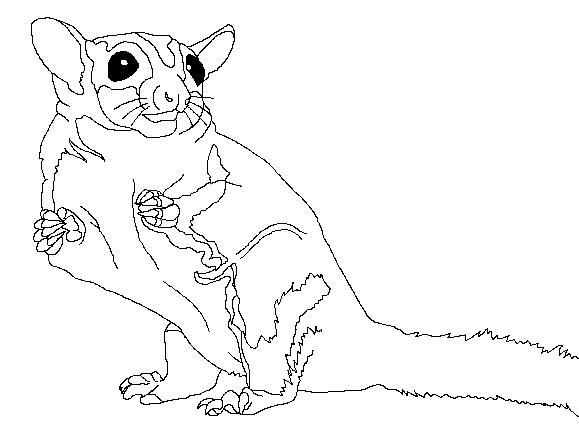 Sugar Glider coloring #2, Download drawings