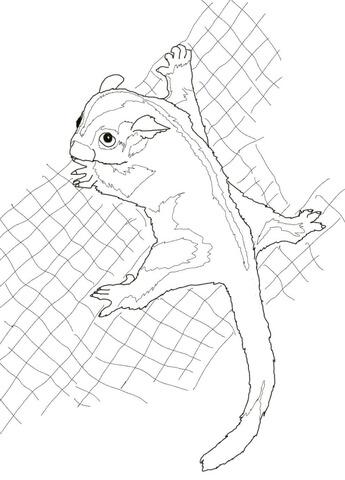 Sugar Glider coloring #5, Download drawings