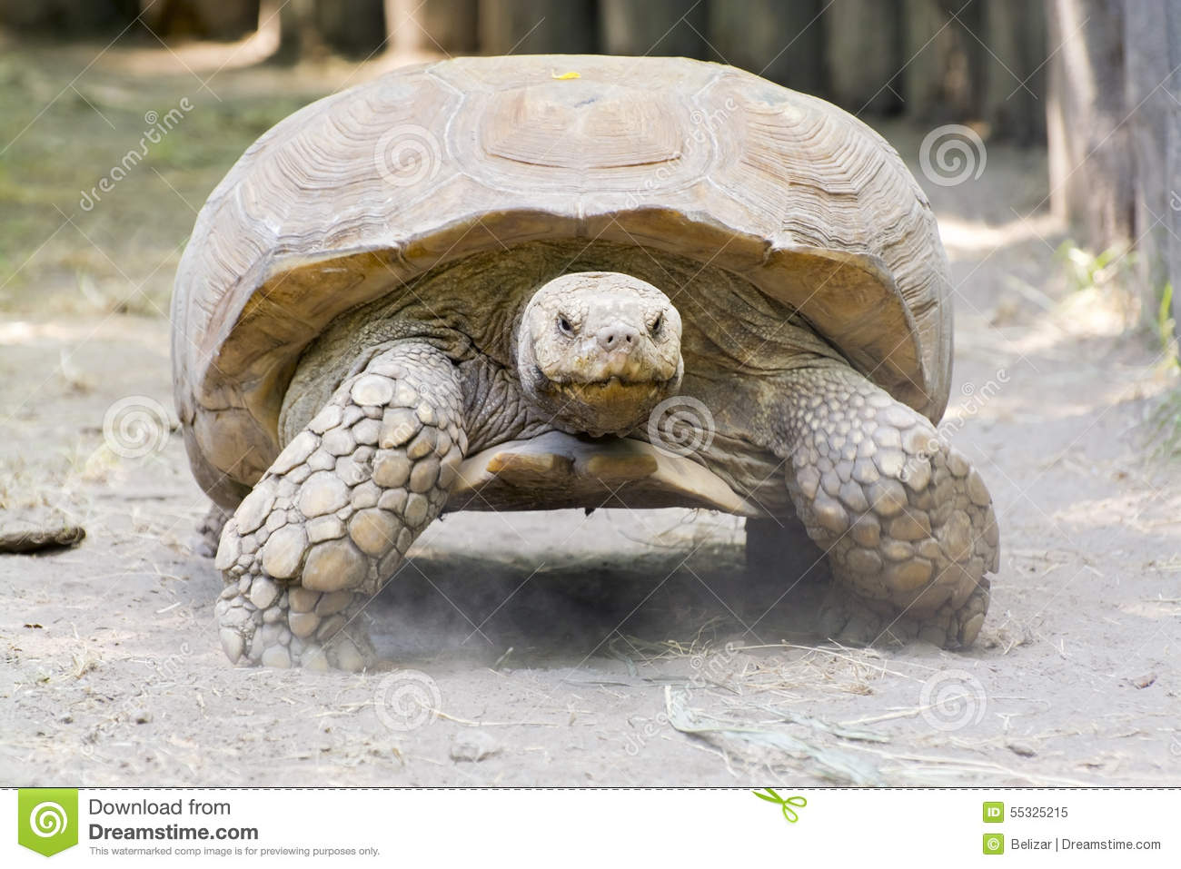 Sulcata Tortoise clipart #9, Download drawings