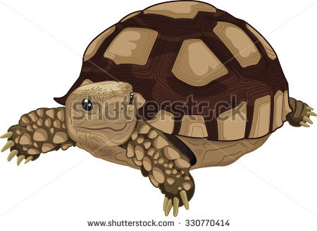 Sulcata Tortoise clipart #19, Download drawings