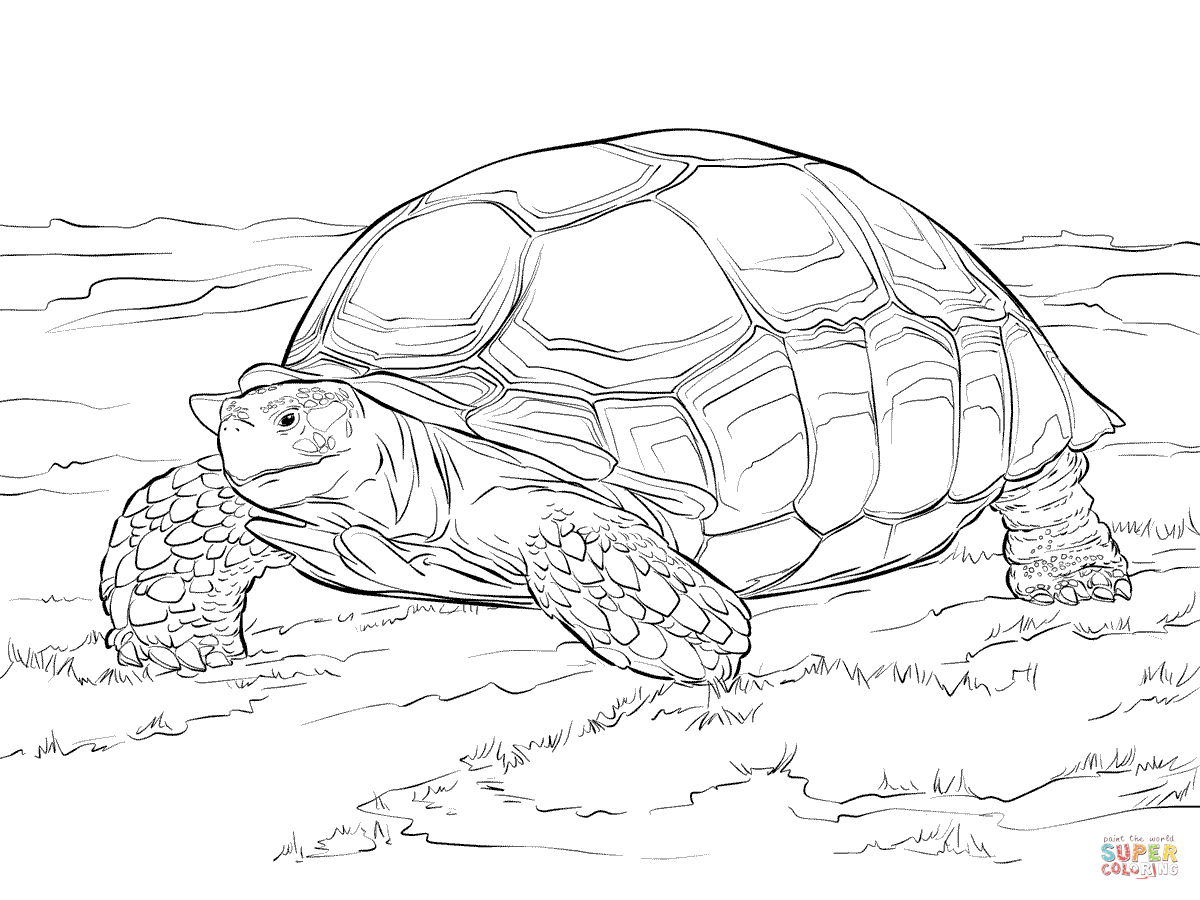 Sulcata Tortoise coloring #17, Download drawings