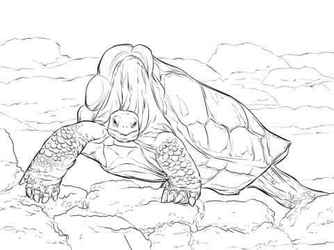 Sulcata Tortoise coloring #4, Download drawings