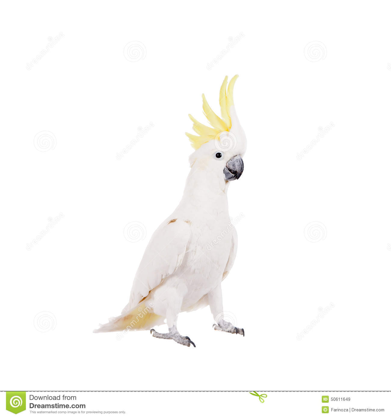 Sulphur-crested Cockatoo clipart #3, Download drawings