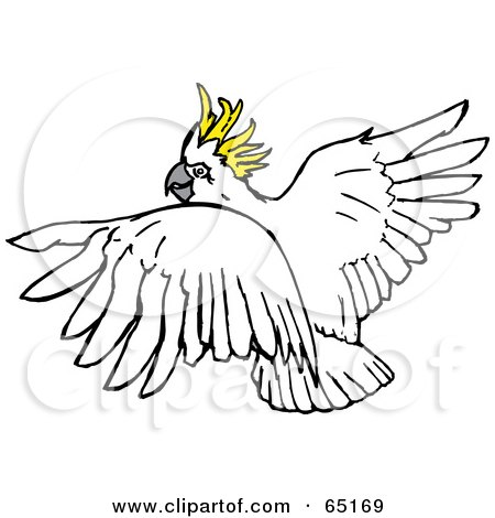 Sulphur-crested Cockatoo clipart #12, Download drawings