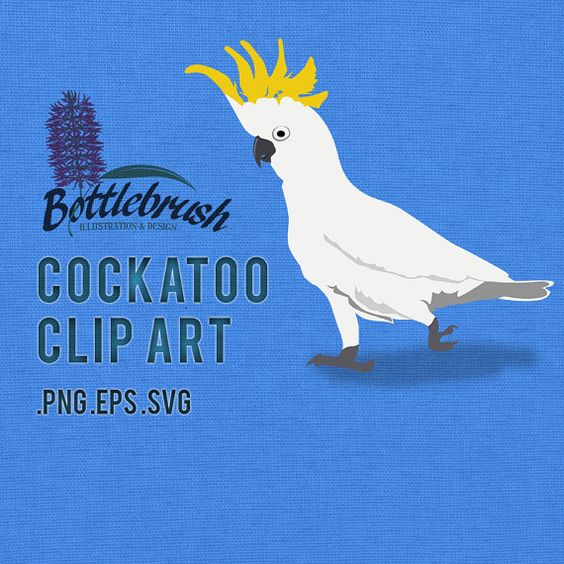 Sulphur-crested Cockatoo clipart #20, Download drawings