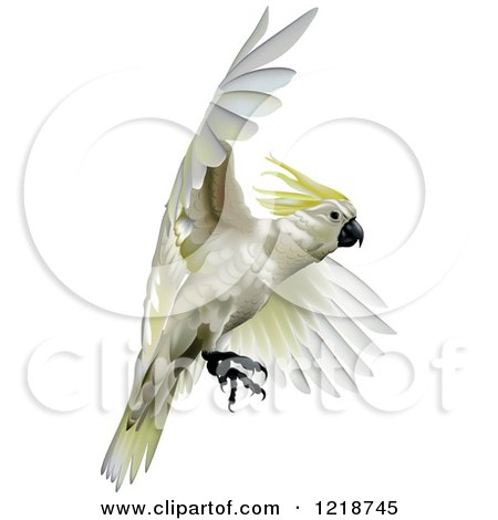 Sulphur-crested Cockatoo clipart #19, Download drawings