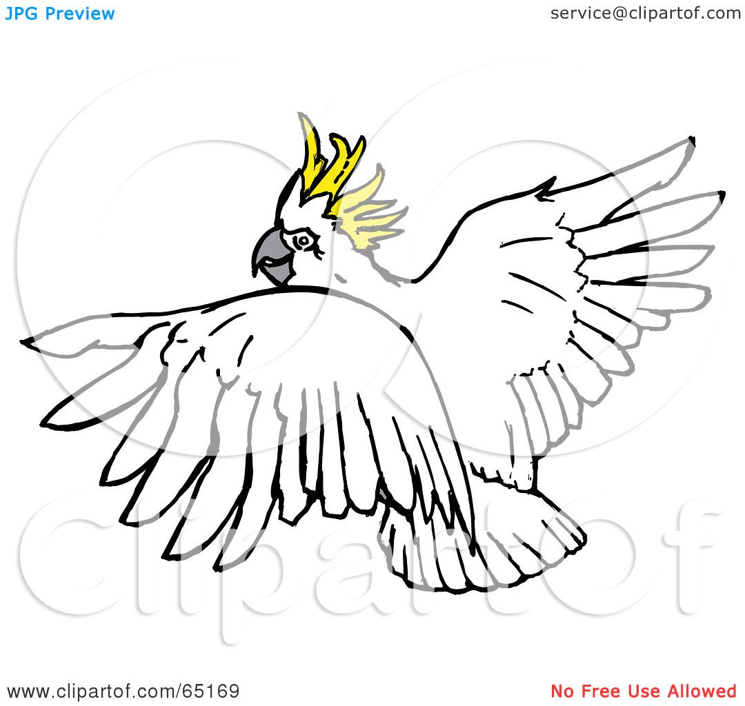 Sulphur-crested Cockatoo clipart #6, Download drawings