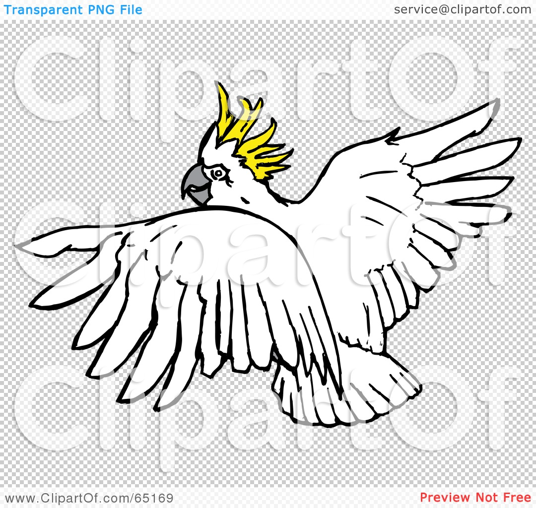 Sulphur-crested Cockatoo clipart #10, Download drawings