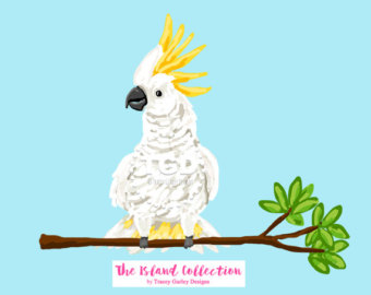 Sulphur-crested Cockatoo clipart #4, Download drawings