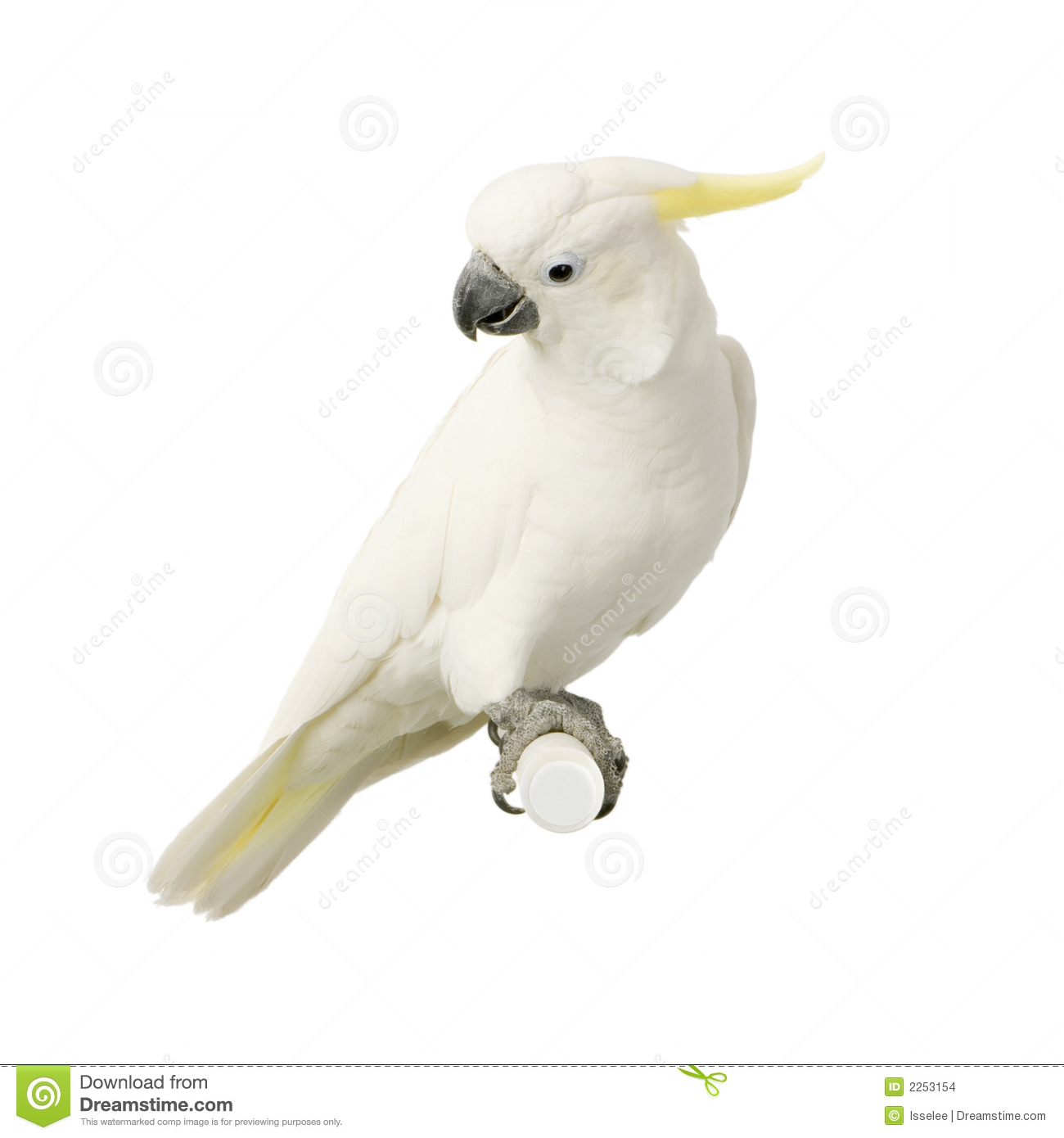Sulphur-crested Cockatoo clipart #8, Download drawings