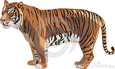 Sumatran Tiger clipart #20, Download drawings