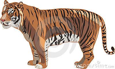 Sumatran Tiger clipart #1, Download drawings