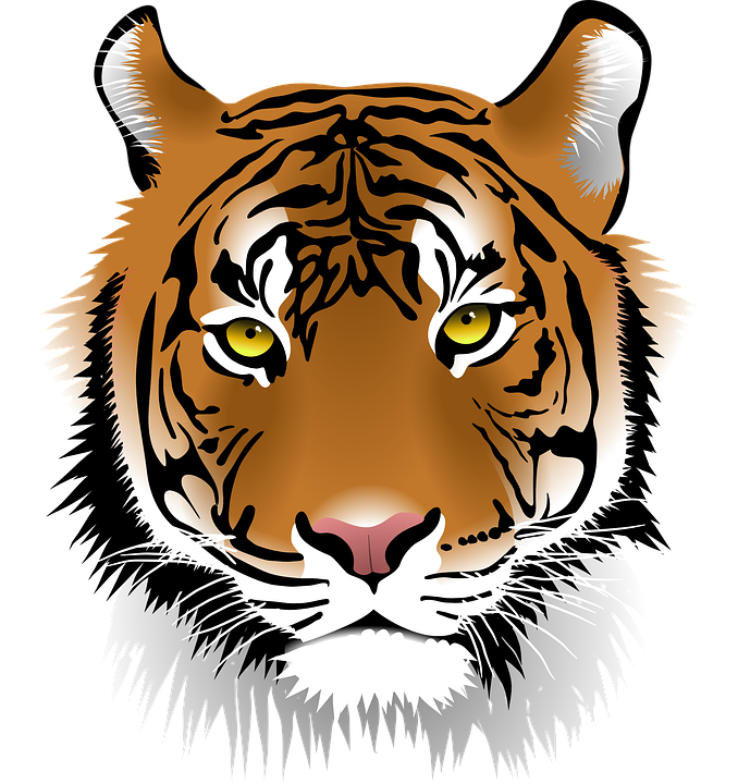 Sumatran Tiger clipart #3, Download drawings