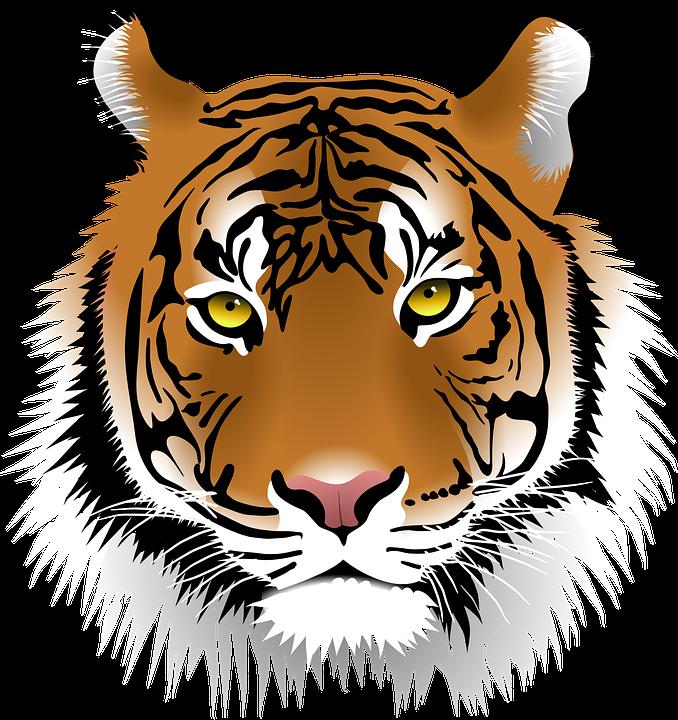 Sumatran Tiger clipart #18, Download drawings