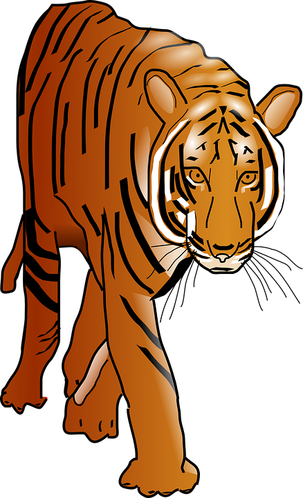 Sumatran Tiger clipart #2, Download drawings