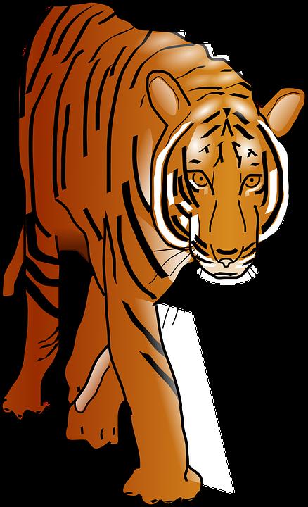 Sumatran Tiger clipart #19, Download drawings