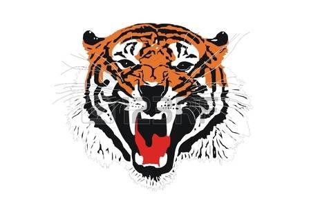 Sumatran Tiger clipart #17, Download drawings