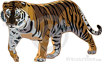Sumatran Tiger clipart #7, Download drawings