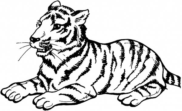 Sumatran Tiger coloring #16, Download drawings