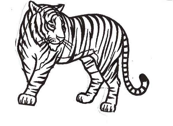 Sumatran Tiger coloring #15, Download drawings