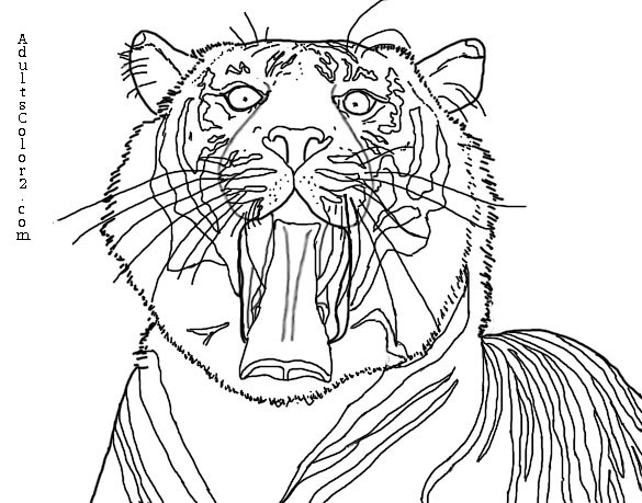 Sumatran Tiger coloring #13, Download drawings