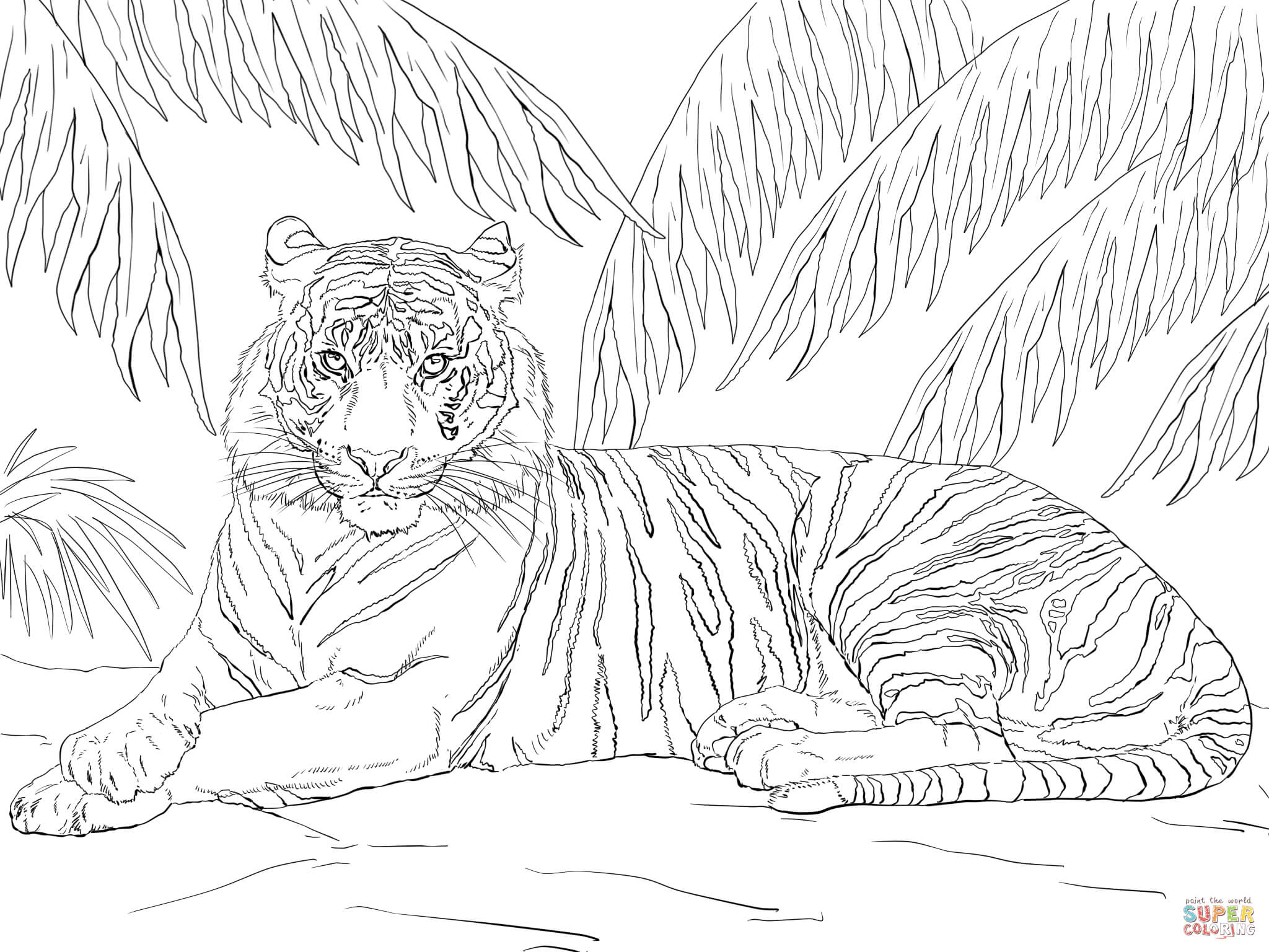 Sumatran Tiger coloring #3, Download drawings