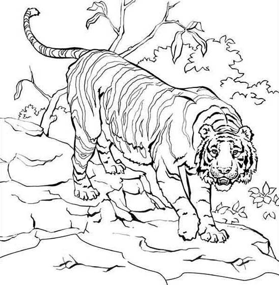 Sumatran Tiger coloring #19, Download drawings