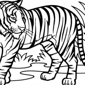Sumatran Tiger coloring #17, Download drawings