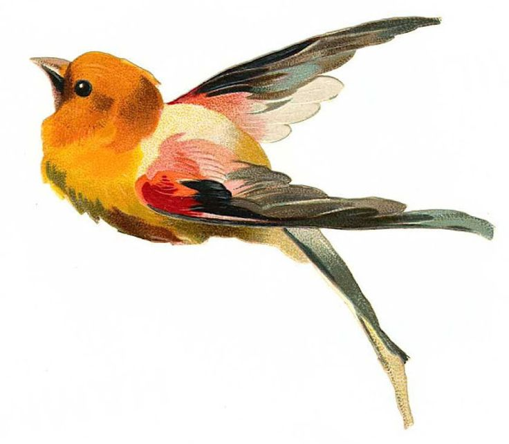 Summer Tanager clipart #6, Download drawings