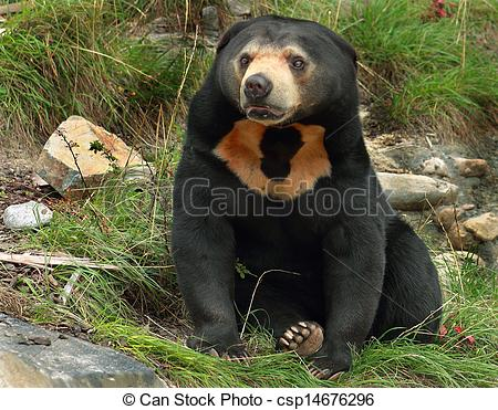 Sun Bear clipart #17, Download drawings