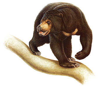 Sun Bear clipart #14, Download drawings