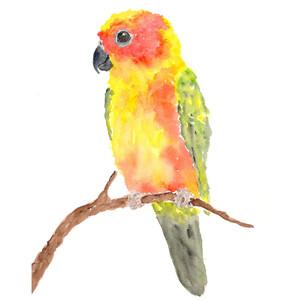 Sun Parakeet clipart #7, Download drawings