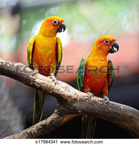 Sun Parakeet clipart #7, Download drawings