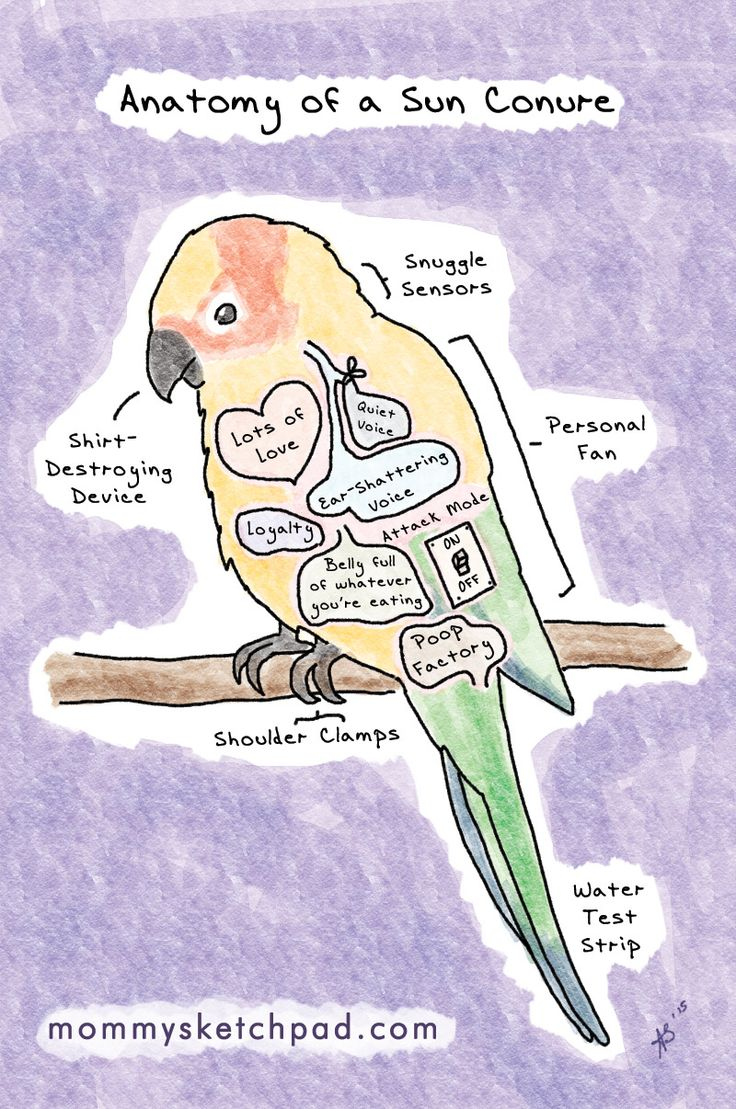 Sun Parakeet clipart #5, Download drawings