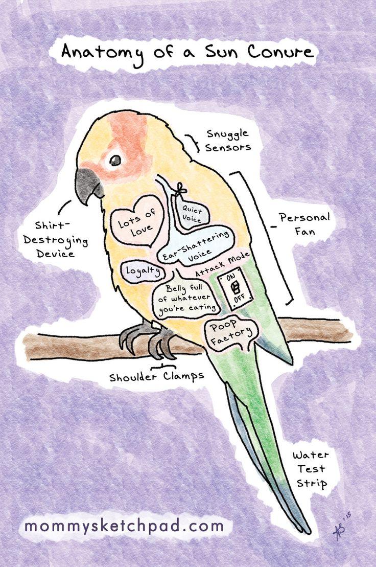 Sun Parakeet clipart #16, Download drawings
