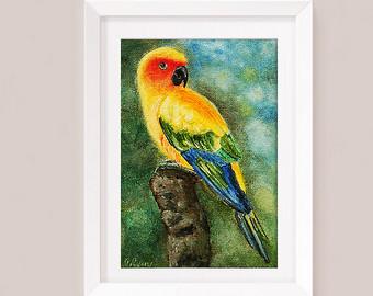 Sun Parakeet clipart #11, Download drawings