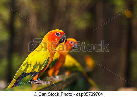 Sun Parakeet clipart #8, Download drawings