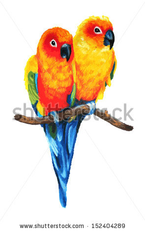 Sun Parakeet clipart #5, Download drawings