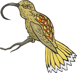 Sunbird clipart #20, Download drawings