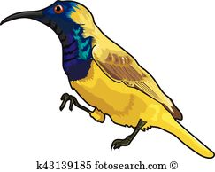 Sunbird clipart #17, Download drawings
